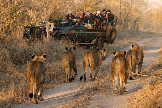 Kaapstad - Het beste van Aquila Safari ...