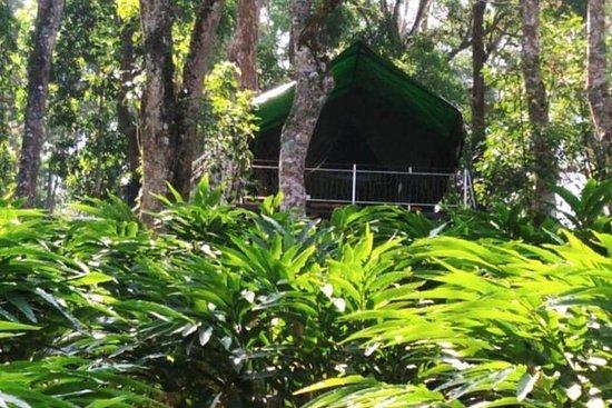 3 jours en retraite de yoga à Munnar avec yoga, massage, trekking et...