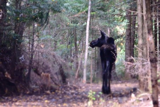 """Moose On The Loose"" 4-Day Canadian Road Trip"