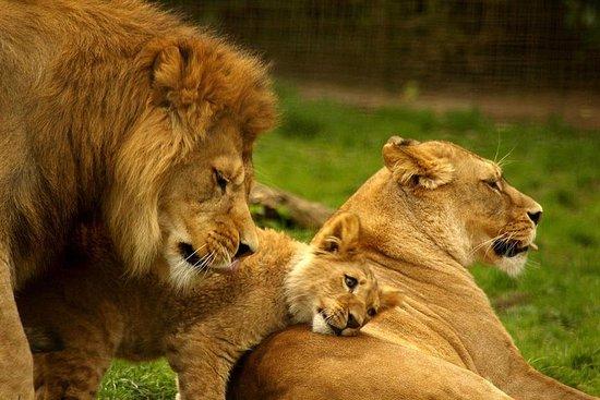 野生动物园半日游-纳塔尔狮子公园,塔拉禁猎区,德班的佩祖鲁中心