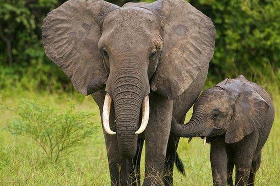 野生动物园-纳塔尔狮子公园,豪威克瀑布和曼德拉捕获基地半日游fr