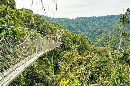 Parcs nationaux de Nyungwe et des...