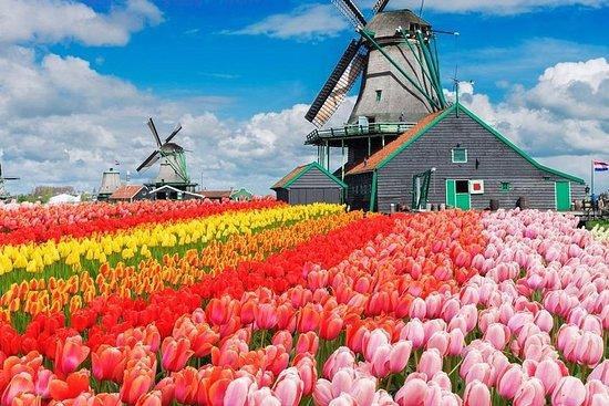 De Bruxelles: visite des tulipes de...