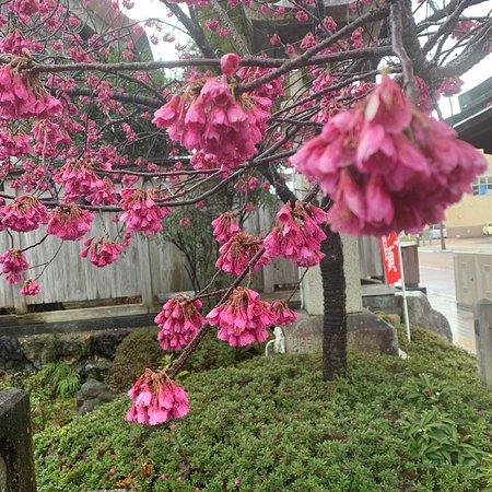 Kotatsuiinotakaichi Honda Shrine