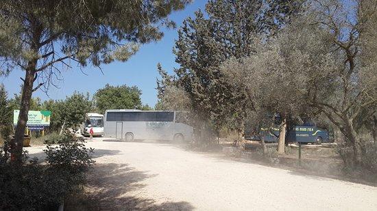 Hof Carmel, Israel: יער עופר מקום יפה לפיקניקים , מסלולי אופניים ועוד . קרוב לבית הארחה לוי בית בכפר