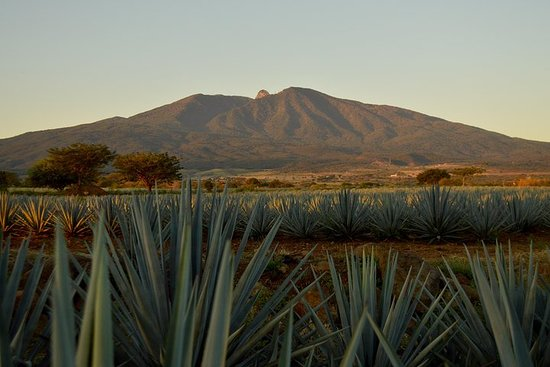 Full-Day Tequila Tour from Guadalajara