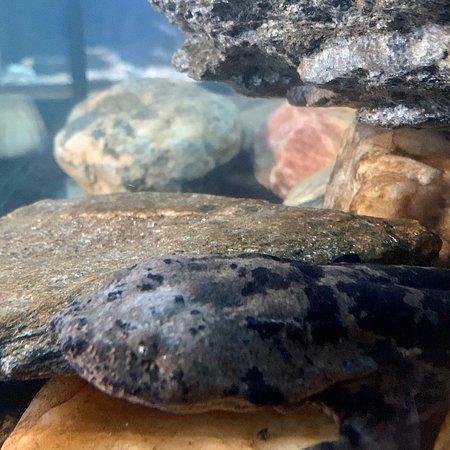 Appalachian Rivers Aquarium