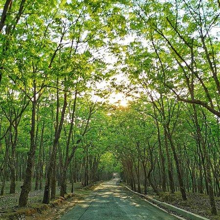 Chittagong Division照片