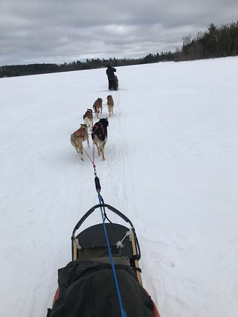 White Wolf Dog Sled Trips