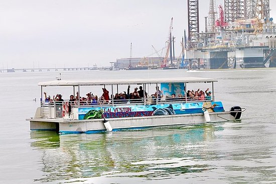 Dolphin Sightseeing Tour