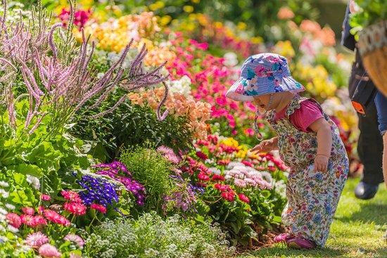 Тувумба, Австралия: Toowoomba Carnival of Flowers Laurel Bank Park