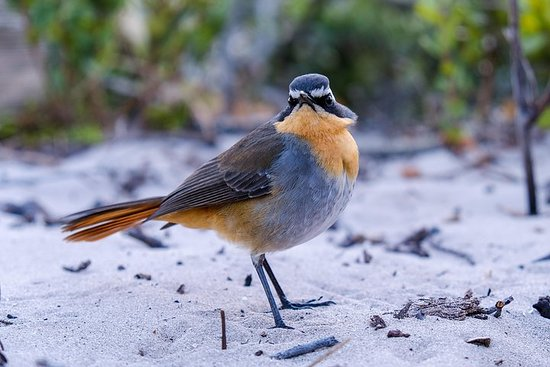開普敦觀鳥之旅-私人自然之旅