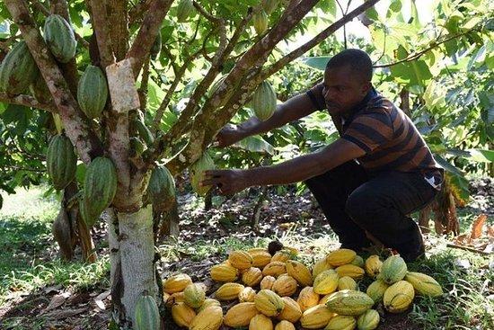 Aroma i Elfenbenskysten