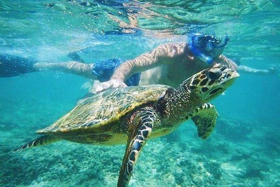 Ultimate Circle Island Snorkling Tours