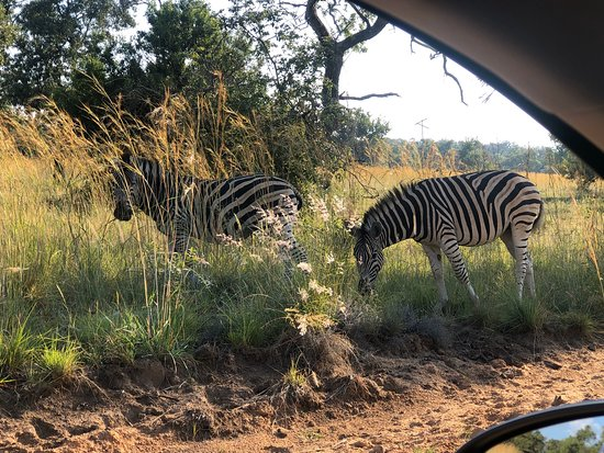 Mabula Private Game Reserve ภาพถ่าย