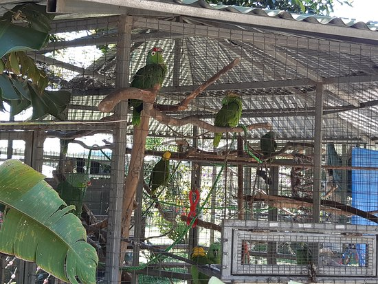 San Isidro, Costa Rica: One of many bird enclosures
