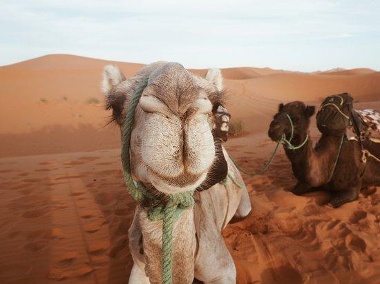 Ibra Morocco Tours