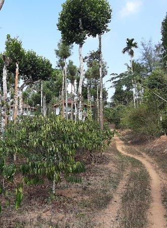 Meenangadi, India: From plantation