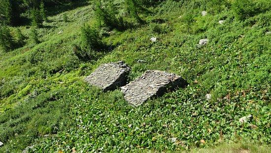 """La """"Via dei Cervi"""" sopra Chiareggio (Val Malenco) - Quando la natura si riprende i suoi spazi ..."""