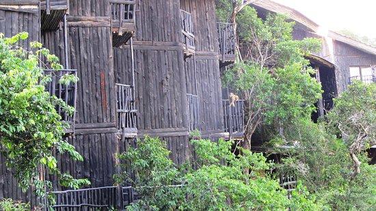Shimba Hills National Reserve, Kenia: Tolle Konstruktion mit Affenbesuch