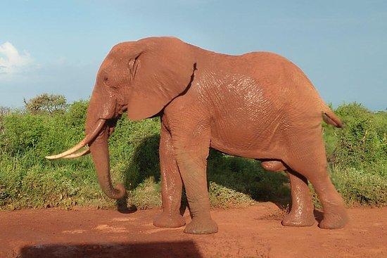 Safaris-Kenia