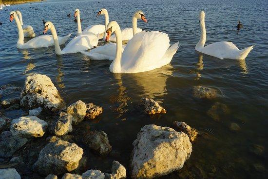 Сакское озеро, Саки: лучшие советы перед посещением ...