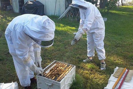 Hands On Beginner Beekeeping Class