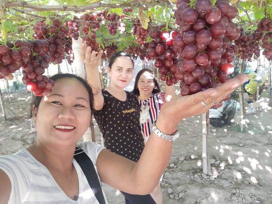 Climasenrose Grape Farm