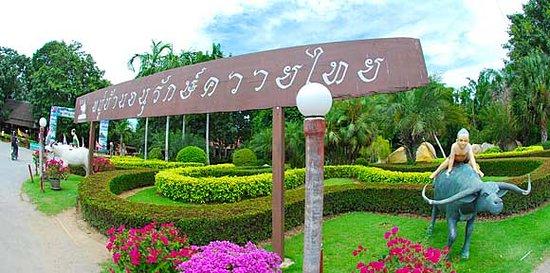 Si Prachan, Thailand:  หมู่บ้านอนุรักษ์ควายไทย(บ้านควายสุพรรณบุรี)