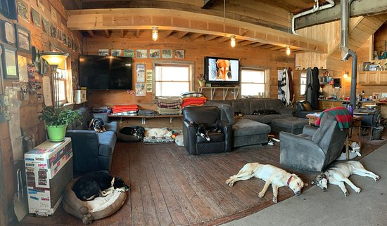 Eden Mills, VT: Chilling with some (11) of the dogs after our adventure.