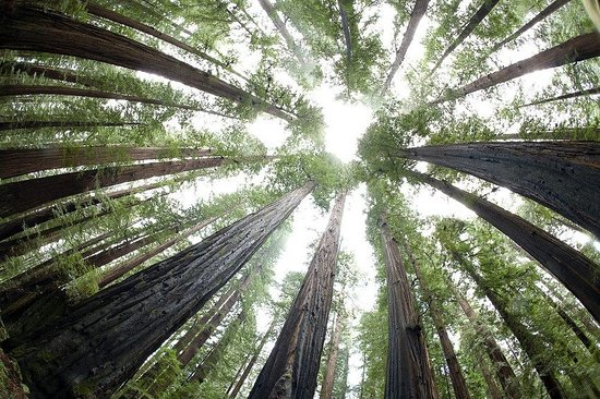 Humboldt County, Californie : Avenue of giants - Redwoods where we got married!