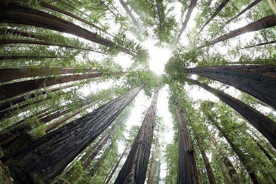 Humboldt County, Kalifornie: Avenue of giants - Redwoods where we got married!