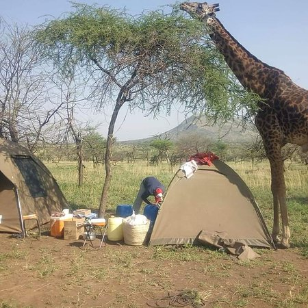 #TrueTour #experience_the_nature See what you see #naturelovers #AfricanExperience #BigFive #wild_of_africa #campsite #adventures  WELCOME ALL FOR INQUIRIES AND BOOKING FOR YOUR TRIP..