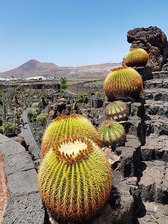 Jardin de Cactus (Guatiza) : 2020 Ce qu'il faut savoir pour votre ...