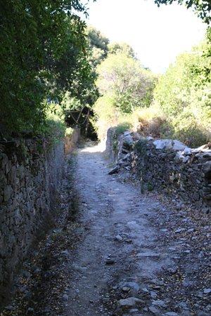 Pino, France: Pour se rendre à la plage, on peut suivre ce sentier depuis les hauteurs