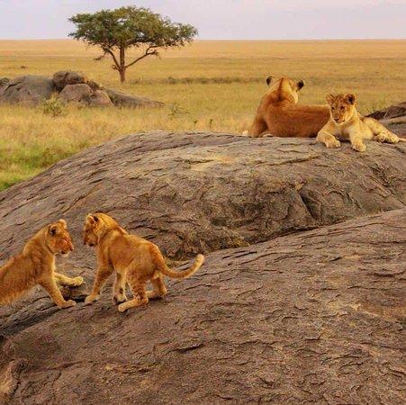 Joyina Safaris Africa