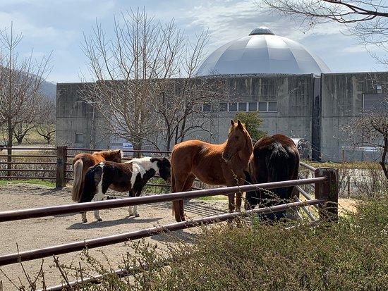 Horse Land Azumino