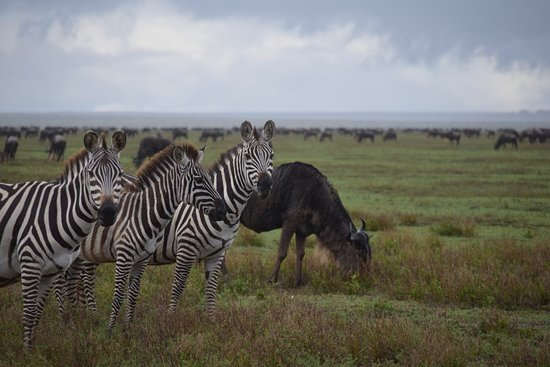 3 days serengeti & ngorongoro lodge tour: Safari Soles was the only company who could deliver on the Great Migration in such a short time frame.  The other companies told us to wait until next year.  We're so happy we chose Safari Soles!