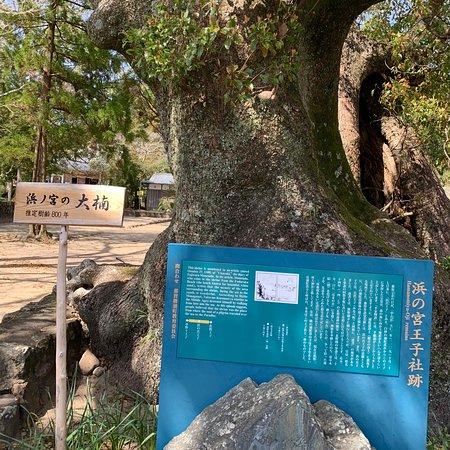 Hamanomiyaoji