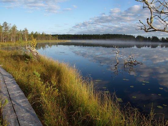 Kivijärvi, Finlandia: Salamajärven kansallispuisto,Pieni Koirajärvi, vasan kierros. Koirasalmen luontotuvan pihapiiristä lähtevät hyvin merkatut eri mittaiset rengasreitit 2,5km-58km joko päiväretkeilyyn tai useamman yön vaellukseen.