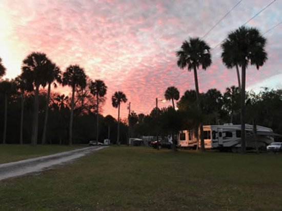 Citra, FL: a beautiful place to camp among the palms and oaks