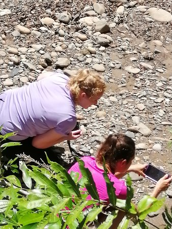 Temburong District, Brunei Darussalam: my guest is viewing lively the beautiful wild butterfly that is flying around