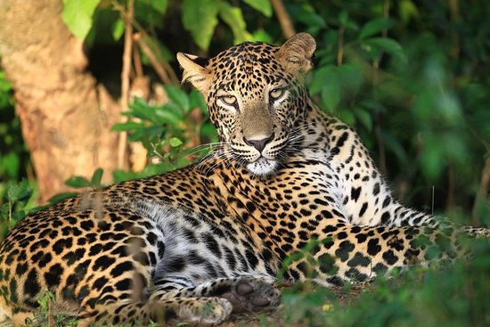 Wilpattu National Park Safari Tour from...