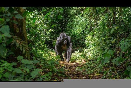 Safari de 2 jours à Murchison Falls