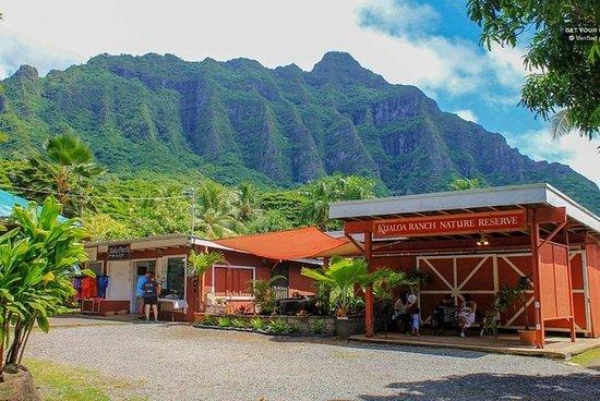Oahu: excursion découverte de la côte...