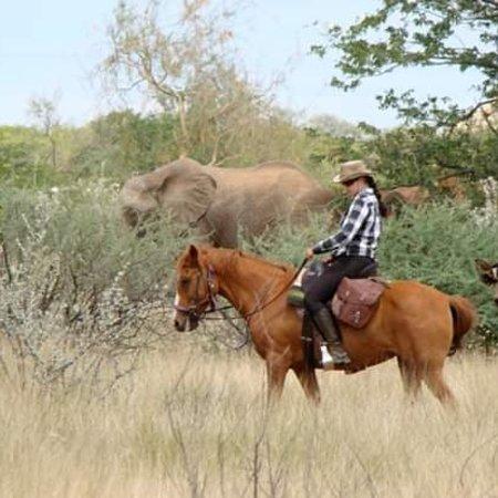 Grootfontein, ناميبيا: Grootfontein Horse Safari's Chahanic Stud & Safari Wendelstein Farmstay & Horse Trails