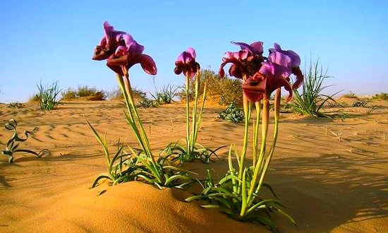 Northern Cape, South Africa: Namaqua National Park 56