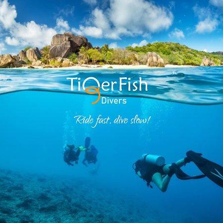 Tiger Fish Divers
