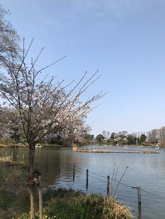 桜も楽しめました