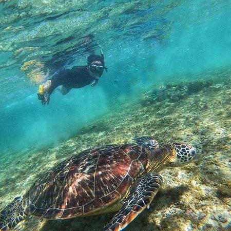 Turtle @Balicasag Island